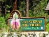 calaveras_big_trees_1