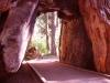 calaveras_big_trees_11