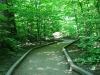 calaveras_big_trees_12