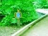 calaveras_big_trees_13