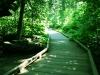 calaveras_big_trees_14