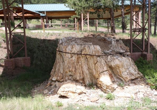 09_Petrified Tree Stump