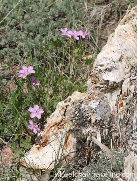 19_Wildflowers by Tree Stump