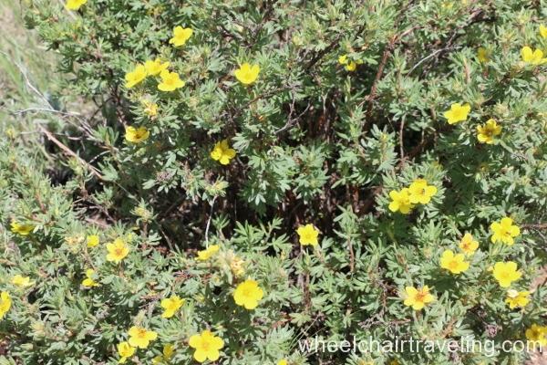 20_Flowering Shrub on Trail