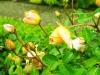 fioli_gardens_16