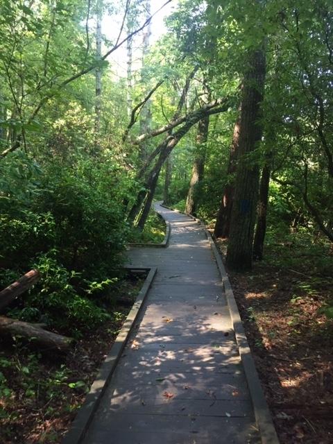 Amicalola-river-trail-32