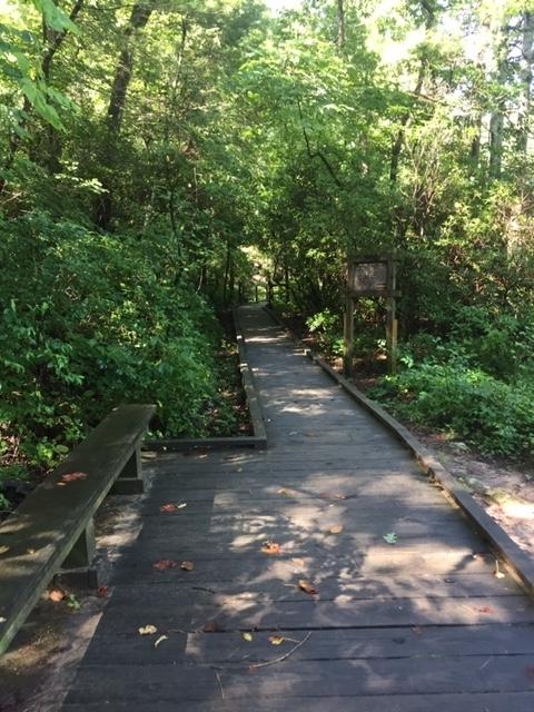 Amicalola-river-trail-6