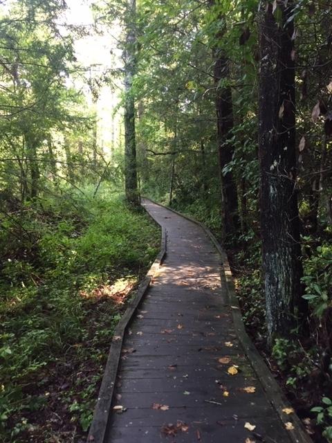 Amicalola-river-trail-9