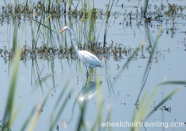 savannah_ga_wetlands_refuge_2016_wt_alo_17