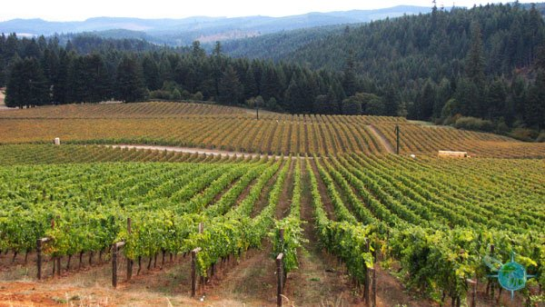 or_king_estate_winery_8