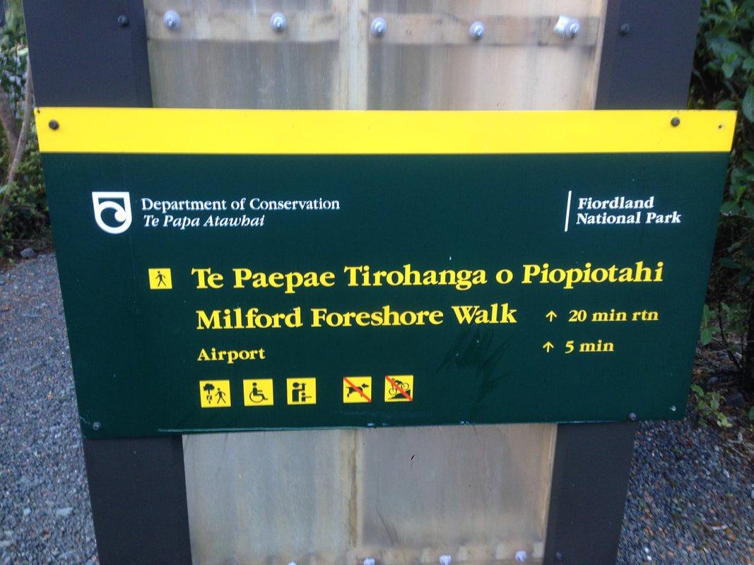 Piopiotahi-Milford-Foreshore-Walk-4