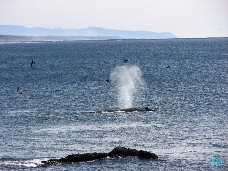 A Whale!