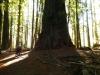 humbodlt_redwoods_1