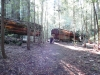 humbodlt_redwoods_10