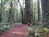 humbodlt_redwoods_7