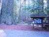 humbodlt_redwoods_8