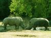 safari_west_1