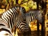 safari_west_2