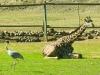 safari_west_28