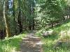 chickadee-nature-trail_small