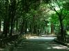Pathway to Shrine at Nara Park