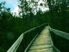 """""""Discovery Trail"""" at Pygmy Forest"""