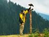 Grouse Mt. Bird Show