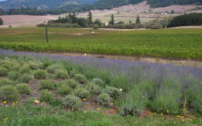 Eugene, Oregon: Visit the King Estate Winery