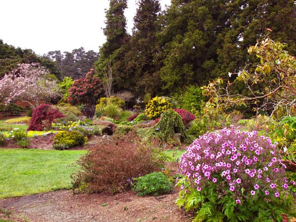 Mendocino coast botanical gardens on the ca coast - Mendocino coast botanical gardens ...