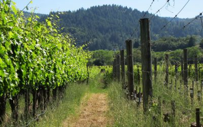 Sonoma Wine Country Accessible Travel Tips