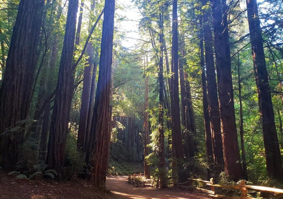 Redwood Hiking Trails in Northern California