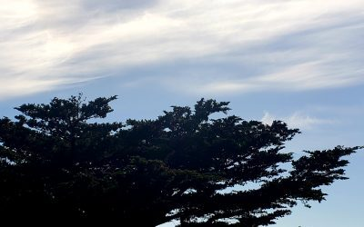 Point Lobos State Natural Reserve on CA Coast