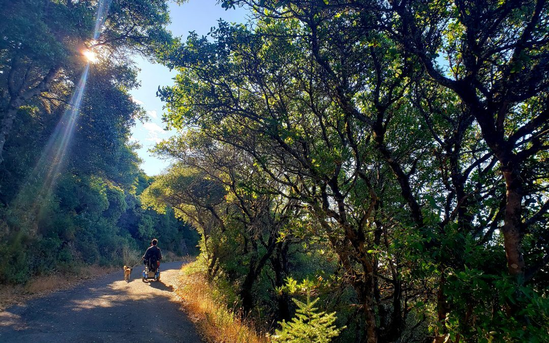 Top 5 Accessible Trails in the San Francisco Bay