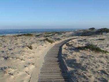 CA, Monterey Bay Area: Asilomar State Beach