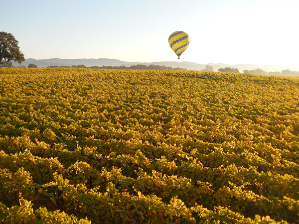 CA Sonoma Wine Country in the Fall