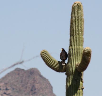Arizona: Organ Pipe Cactus National Monument
