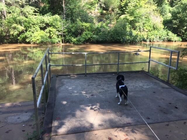 Dawsonville, Georgia: Amicalola River Trail