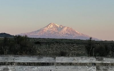 The Mt. Shasta Trinity Forest Area