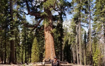 Mariposa Grove @ Yosemite NP