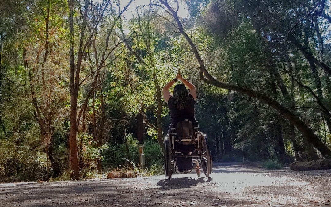 Hendy Woods: California State Park